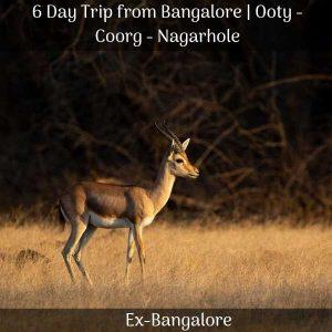 Ooty Coorg Nagarhole trip