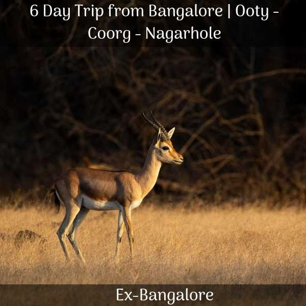 Ooty Coorg Nagarhole 6 Days Trip from Bangalore