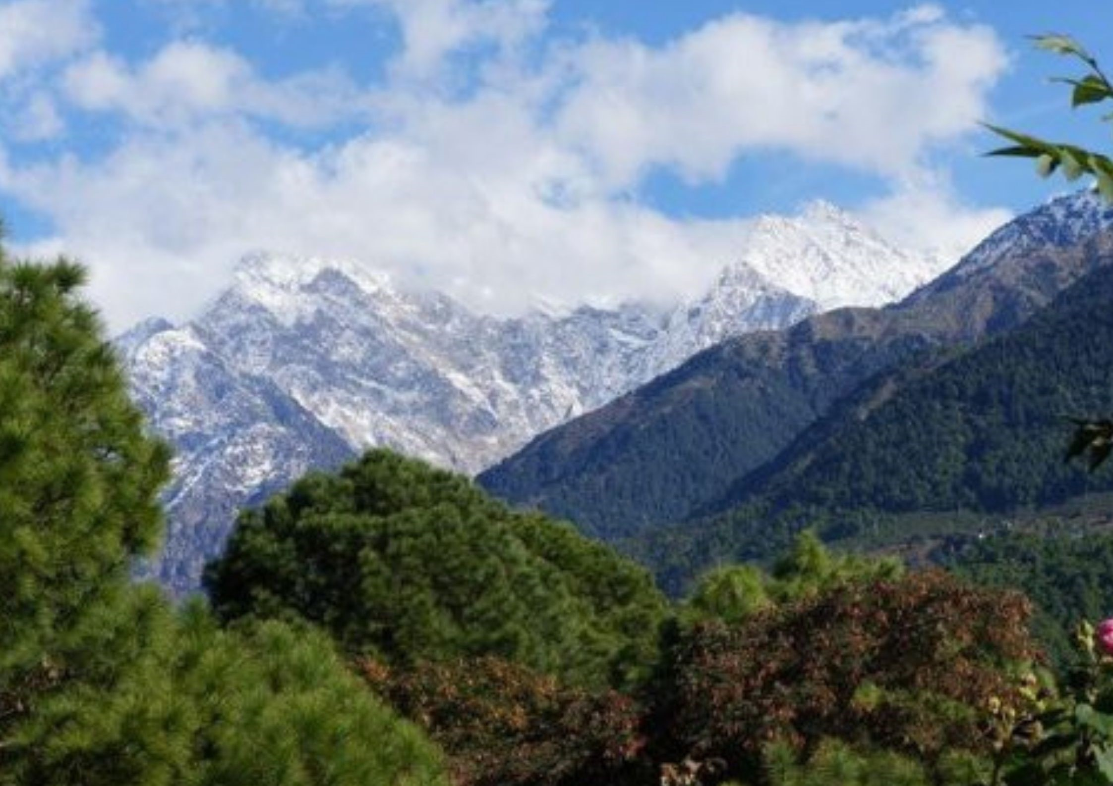 Palampur, hill station in north india